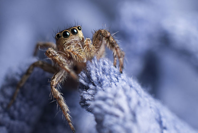 Animal Wildlife Animals In The Wild One Animal Animal Themes Arachnid Close-up Invertebrate Spider Animal Arthropod Selective Focus Jumping Spider Insect Nature Day No People Zoology Animal Body Part Winter Macro Animal Eye Animal Leg