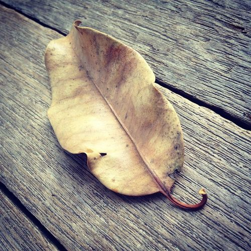 Parched Dry_Leaf Super_Hot