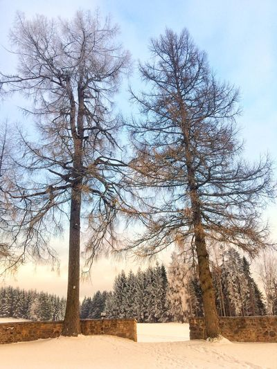 Tree Bare Tree Nature Sky Day Branch No People Tranquility Outdoors Beauty In Nature Scenics