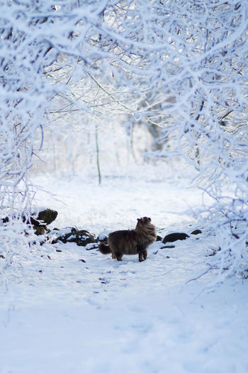 Animal Animal Themes Snow Winter Cold Temperature One Animal Mammal Domestic Pets Domestic Animals Nature No People Day Land Field Canine Outdoors Swedish Nature House Cat Winter Scene Cat