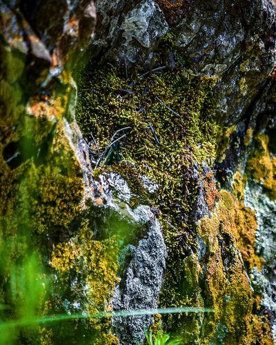 Moss growing on rocks
