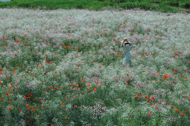 View of bird perching on flower field