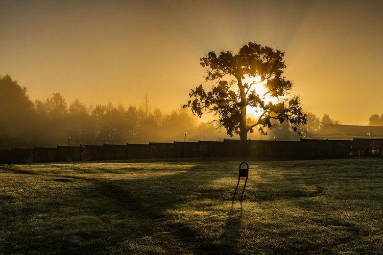 A foggy autumn