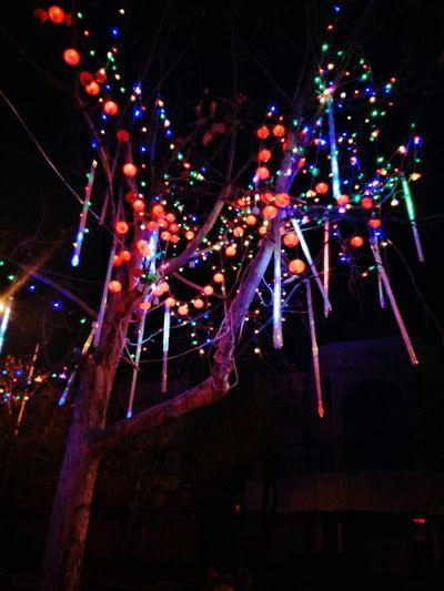 Happy Lunar year Celebration Night Christmas Illuminated christmas tree Christmas Lights Christmas Decoration