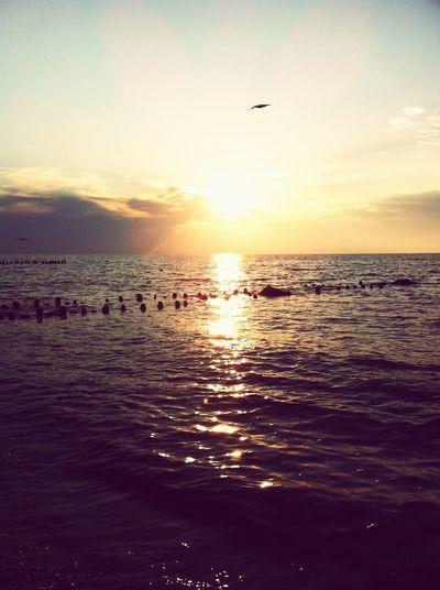 🌅 Beach