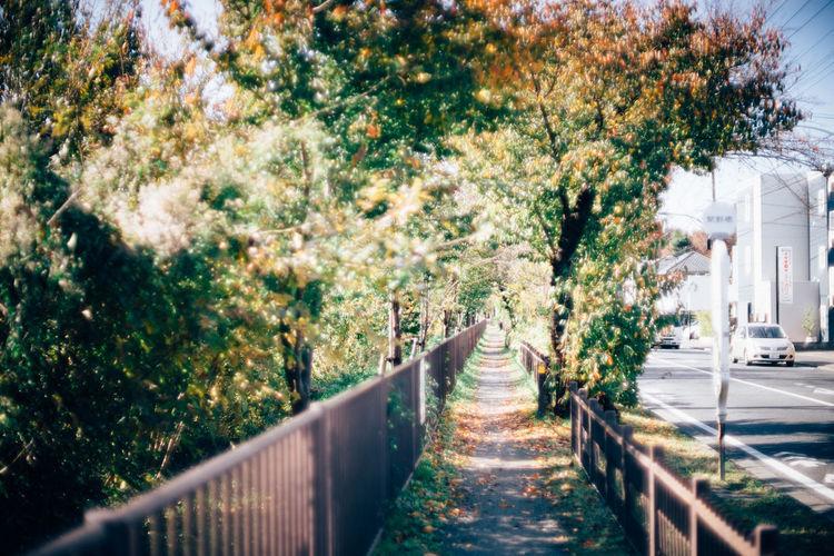 さんぽ道 Autumn Leaves Walking Walking Way Walking This Way Sunshine Day Sunnydays Nostalgic  Nostalgic Landscape