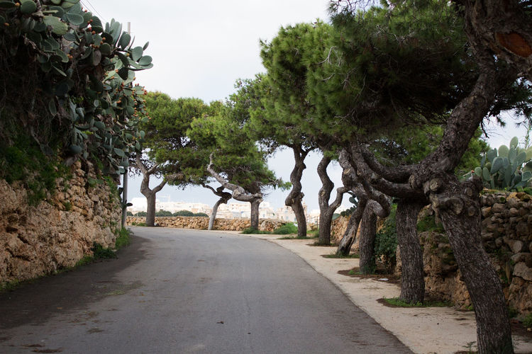 Tree Plant Road The Way Forward Direction Growth Nature Sky Day Tranquility Street Beauty In Nature Diminishing Perspective Footpath Outdoors No People Tranquil Scene Scenics - Nature Clear Sky Long Treelined Gozo Gozo Malta