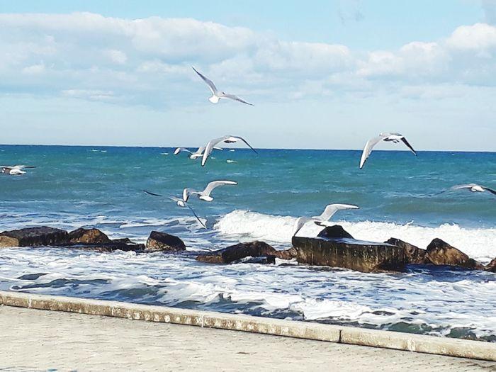 Sea Bird Beach Water Animals In The Wild Horizon Over Water Nature
