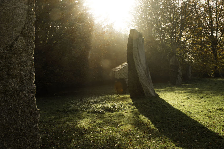 Clearing Day Druid Druid's Secret Place Fantasy Forest Nature Nature No People Outdoors Standing Stone Standing Stones Stone Sunbeam Sunlight Wood