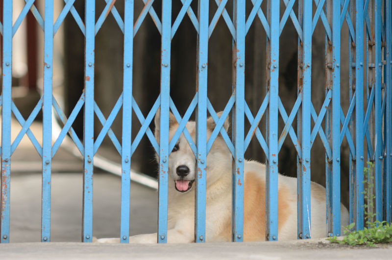 Portrait Of Dog Looking Through Metallic Shutter