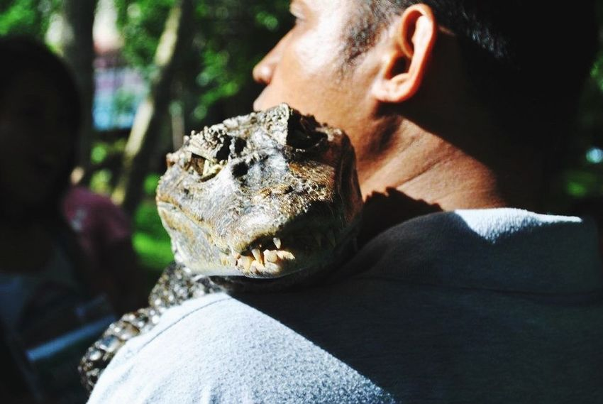 Philippines Bayawak Photography Animals Exotic Tagaytay Second Try Post
