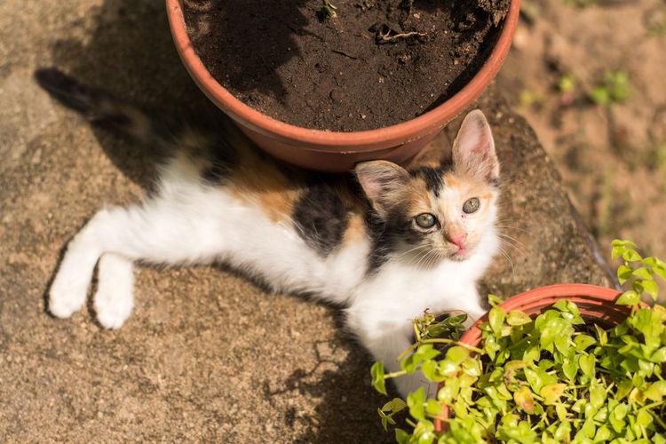 High angle view portrait of cat by flower plants