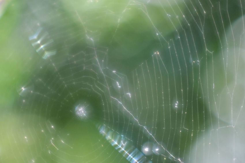 Bokehlicious Shining Spider Animal Themes Backgrounds Beauty In Nature Bokeh Bokeh Photography Close-up Day Fragility Freshness Full Frame Green Color Nature No People Outdoors Spider Web Spiders Tender Trioplan Trioplan50