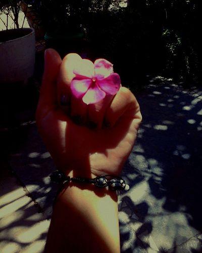 Se o amor cabe em uma so flor, então ele é infinito. 🌸❤ Florence Florflor Florita FlorFlor Live Love ♥ First Eyeem Photo