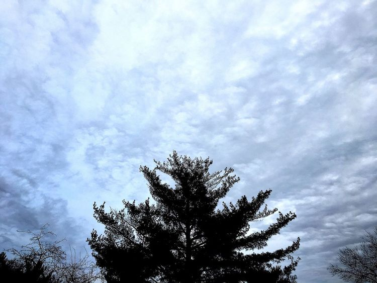 Tree Sky Nature Low Angle View Cloud - Sky Growth Treetop Beauty In Nature Tranquility No People Outdoors Silhouette Scenics Branch Day