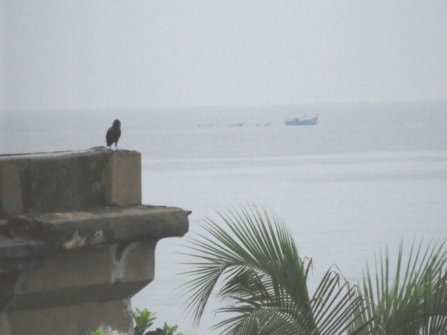 Raven Palm Trees ❤❤ Sea Rainy Days☔India