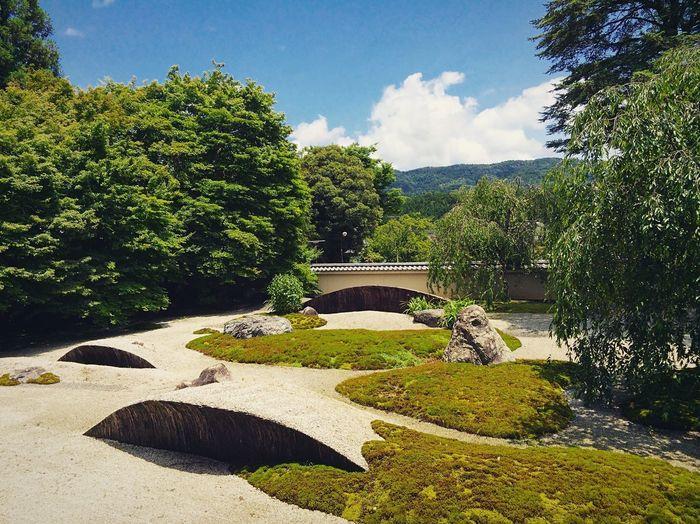 実相院 Kyoto,japan Tranquil Scene Travel Destinations Japan Photography Plant Tree Nature Growth Sunlight Sky Day Shadow Cloud - Sky Tranquility Garden Formal Garden