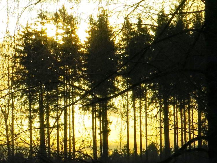 Sunrise_Collection Hugging A Tree Sunrise... Onmywaytowork TreePorn