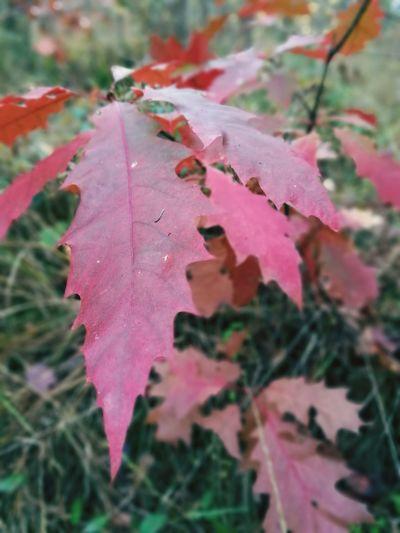 Nature Leaf Autumn Close-up First Eyeem Photo Maximum Closeness
