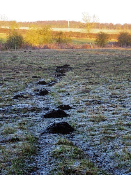 Molehills Countryside Cribbs Meadow Daytime Field Frost Grass LINE Mole Hills