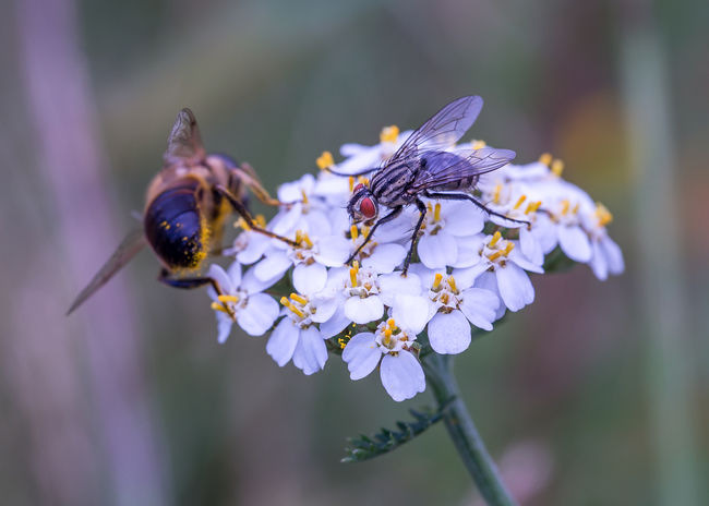 team work Animal Themes Animal Wildlife Animals In The Wild Close-up Flower Flower Head Focus On Foreground Fragility Freshness Growth Insect Insect On Flower Head Nature No People Outdoors Petal Plant Pollination Two Animals Two Insects White Flower Head
