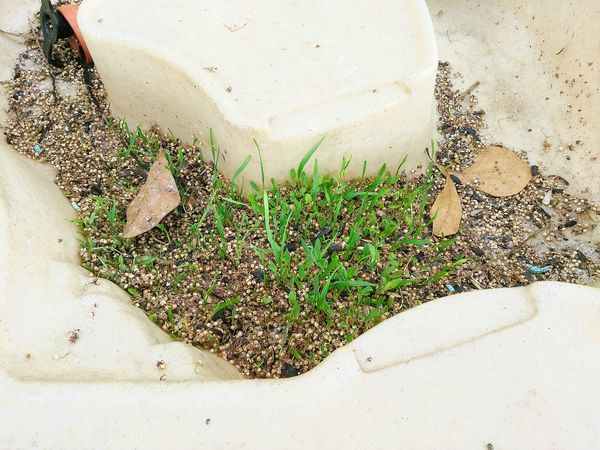 The Unexpected Birdseed Sprouting Up Sandbox Planting Seeds Who Knew Break The Mold Lost In The Landscape