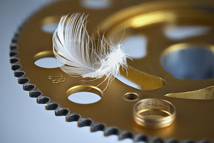 High angle view of feather on table