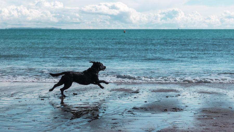 Dog Canine One Animal Domestic Sea Mammal Pets Domestic Animals Water Animal Themes Animal Beach Land Vertebrate Sky Motion Horizon Over Water Horizon Nature No People