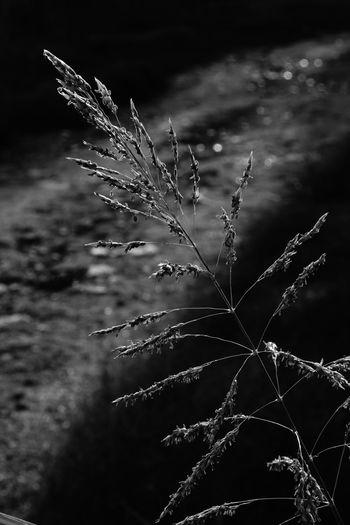 Flower Close-up Sky Plant Dandelion Dew Dandelion Seed Blade Of Grass Single Flower Damselfly Flower Head Droplet Stem Thistle Wildflower Spider Web Plant Life RainDrop Softness Water Drop Uncultivated Drop EyeEmNewHere