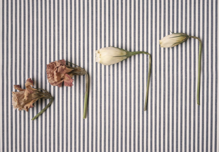 Close-up of dried flowers on stripped background