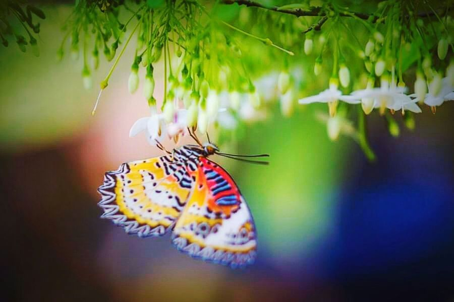 Butterfly. 💝 Relaxing Flowers To The World Beautiful Surroundings Things That Are Green Flowers,Plants & Garden First Eyeem Photo EyeEm Nature Lover Eyeem Nice Shots