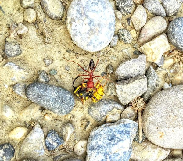 High angle view of insect on rock