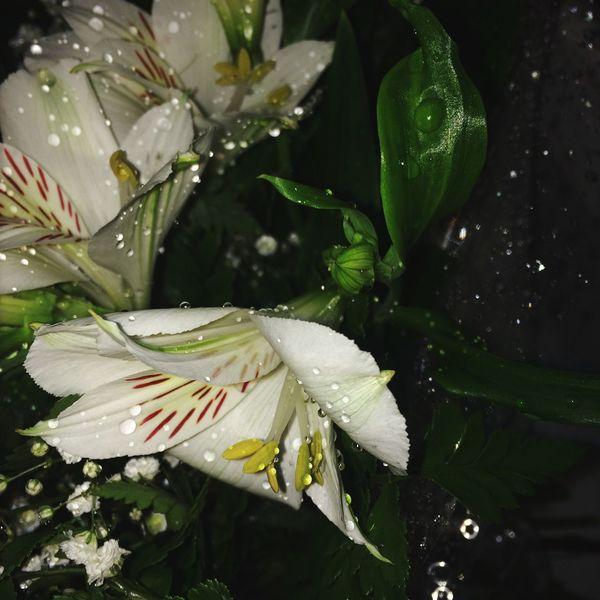 Flowers Beautiful White First Eyeem Photo