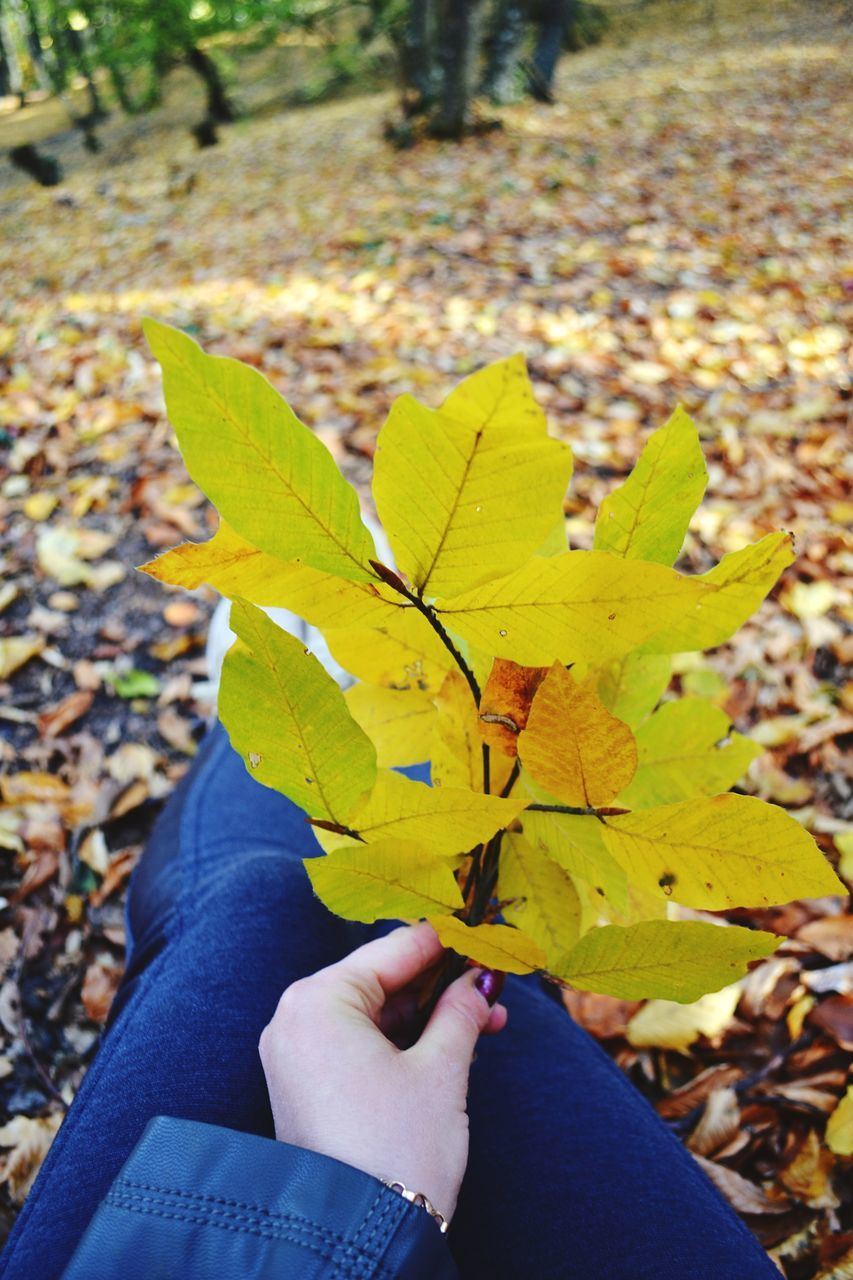 leaf, autumn, change, human hand, one person, real people, human body part, leaves, personal perspective, holding, maple leaf, human finger, close-up, unrecognizable person, nature, day, outdoors, maple, leisure activity, beauty in nature, human leg, women, lifestyles, fragility, men, low section, people