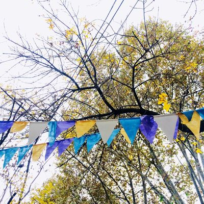 Flags Autumn Low Angle View Tree Plant Branch Day Growth No People Sky Backgrounds Multi Colored Beauty In Nature Nature Flowering Plant Outdoors