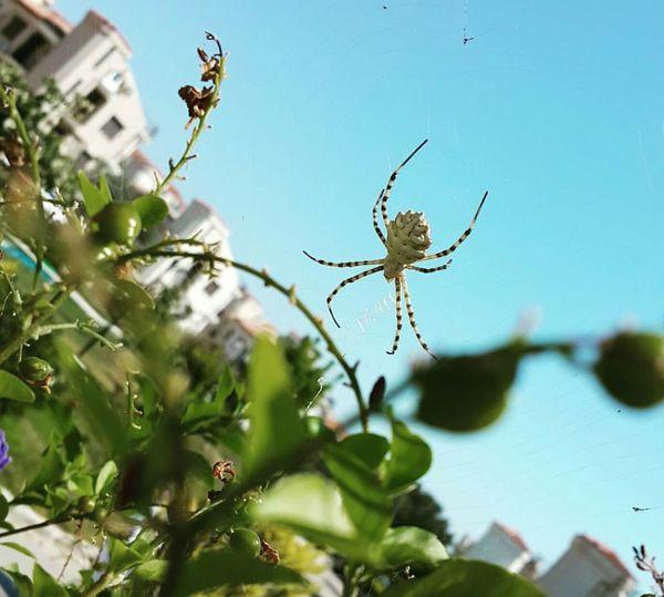 Güzelyalı Bursa/Mudanya Turkey Taking Photos Doğa Anıyakalamak örümcekcik