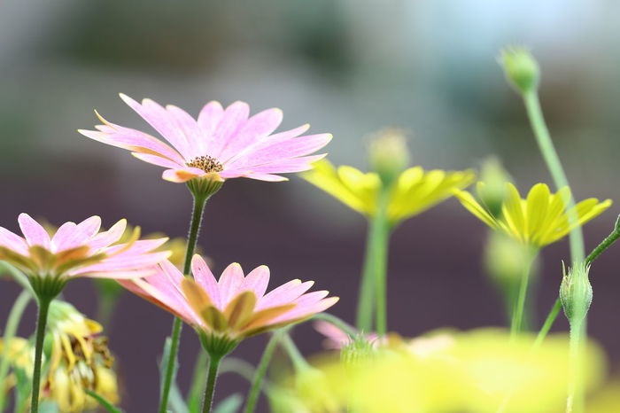 #canon700D #NoEdit Beauty In Nature Blooming Blossom Botany Depth Of Field Flower