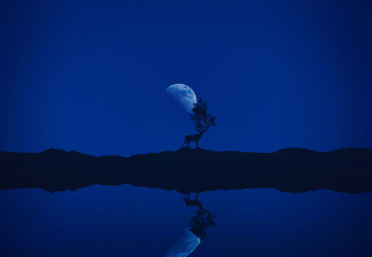 Reflection of deer on hill in lake at night