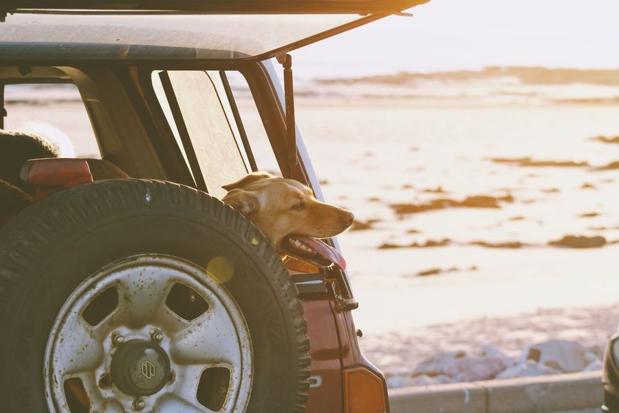 Tail wags. One Animal Animal Themes Day Land Vehicle No People Transportation Domestic Animals Outdoors Pets Dog Mammal Nature Close-up The Week On EyeEm Beach