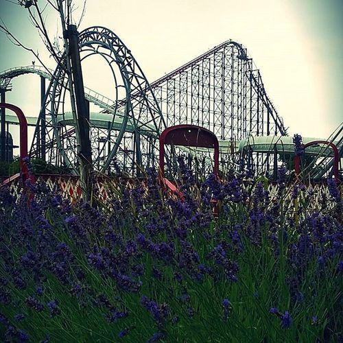 Blackpoolplesurebeach Blackpool Fun Scared Endorfins Adrenaline Scream FirstTime Instagood Uk Rollercoaster