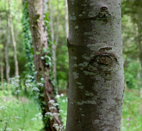 Close-up Tree