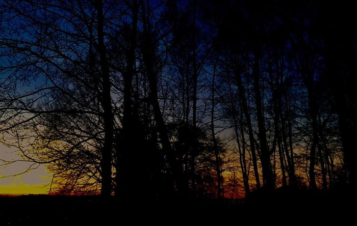 Mix Yourself A Good Time Silhouette Light And Shadow Tree Tranquil Scene Nature Bare Tree Sunset Beauty In Nature Tranquility Scenics No People Sky Forest Branch Outdoors Night Sunset And Clouds  Sunset Silhouettes EyeEm Sunset EyeEm Best Shots - Nature