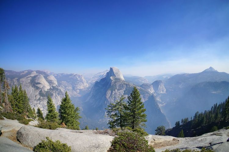 Zu Besuch in den Vereinigten Staaten von Amerika - Visiting the United States of America USA United States Vacations Urlaub Half Dome Blue Sky Blue Sky Pinaceae Mountain Pine Tree Mountain Range Forest Outdoors Mountain Peak No People Nature