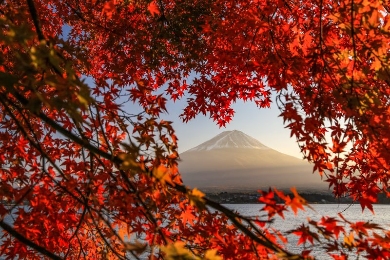 Red Maple Tree Against Sky During Autumn
