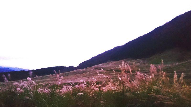 箱根 仙石原 すすき群生地 Silver Grass Silver Grass Field Japanese  Japan Nature お出掛け Trip Photo Hakone Japan Hakone-JP Japan Photography Japanese Garden Japanese  Hakone Japan Photos Trip Japanese Culture