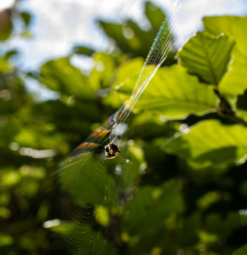 Spider Web Spider Insect Invertebrate Animals In The Wild Animal Wildlife Animal Animal Themes One Animal Plant Green Color Close-up Growth Leaf Nature Plant Part Day Selective Focus Beauty In Nature Focus On Foreground No People Zoology Outdoors Animal Wing
