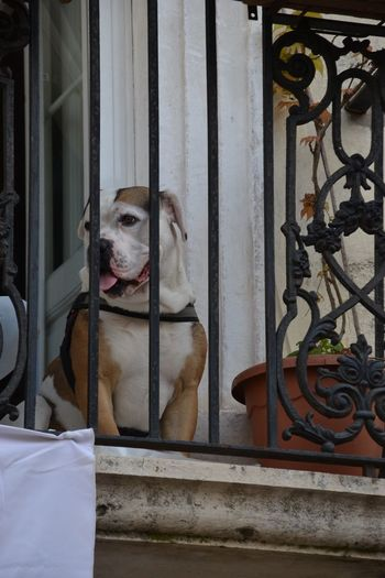 Animal One Animal Animal Themes Pets Mammal Domestic Dog No People Domestic Animals Vertebrate Window Glass - Material Day Metal Outdoors Transparent Sitting Architecture Canine