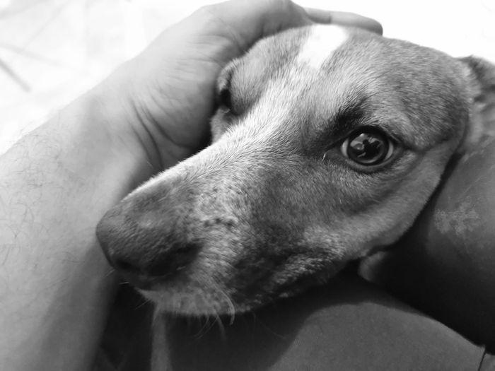 Close-up of hand holding dog