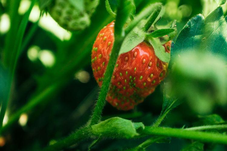 Red Food Fruit