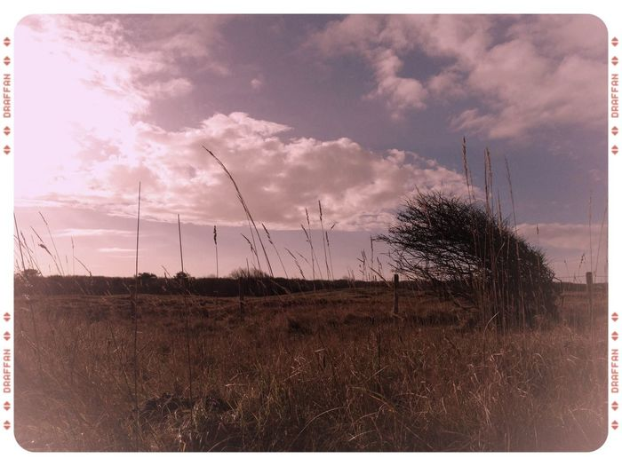 Sunny Day Dunes